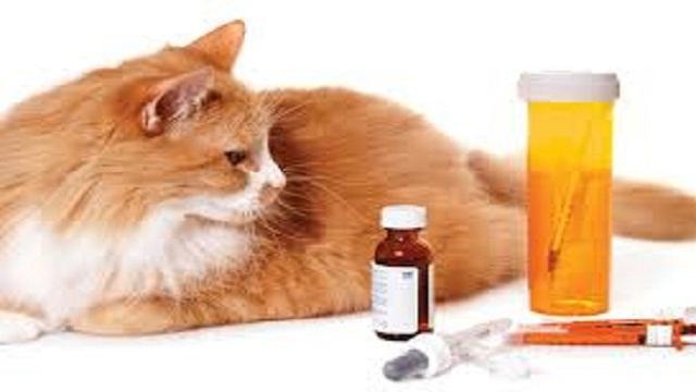 VIDEO: Los gatos y los analgésicos