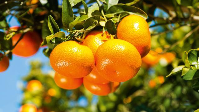 Los beneficios de las mandarinas para su salud