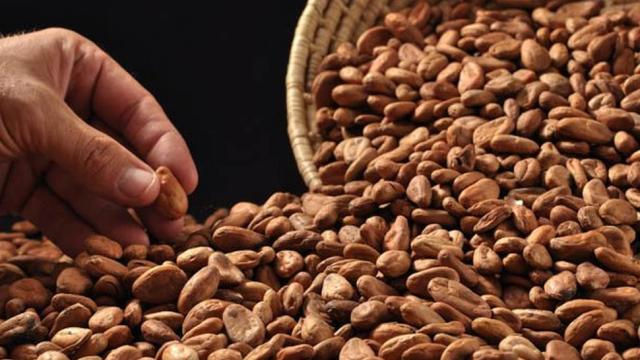 ¿Cuáles beneficios ofrece el cacao a la salud?