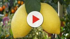Scoperta rivoluzionaria: un alimento che sconfigge le cellule tumorali