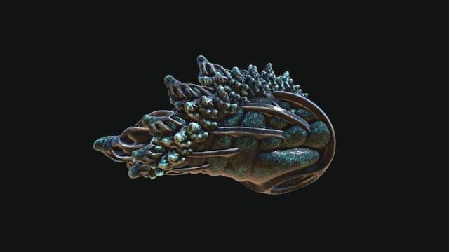 Nace de un caracol de mar una alternativa a los opioides, para tratar el dolor