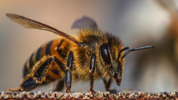 La Unión Europea decide prohibir algunos pesticidas y proteger a las abejas
