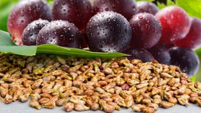 ¿Para que nos sirven las semillas de las uvas?