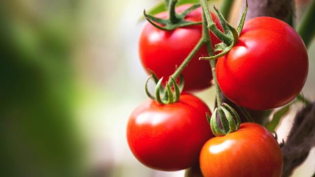 ¿Cuales usos medicinales tiene el tomate?