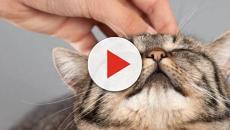 ¿Cómo cortamos las uñas a nuestro gato?