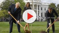 President Macron's symbolic tree disappears from the White House