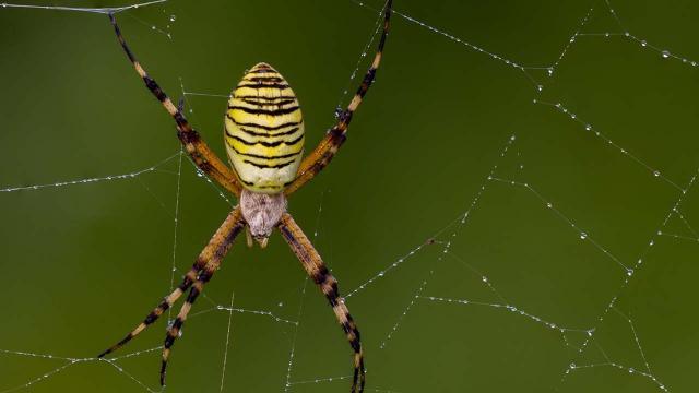 Nella tela del ragno, miracolo della natura
