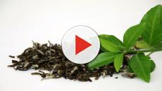 ¿En que nos beneficia tomar té verde?