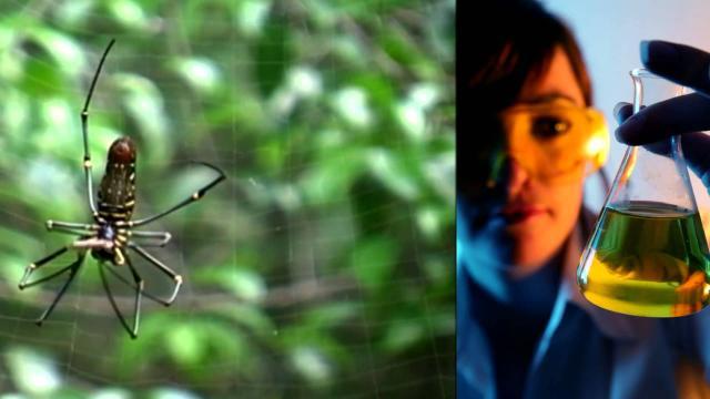Una avalancha de medios sobre biomimetismo