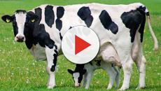 El bienestar animal, asegura una mejor salud para todos