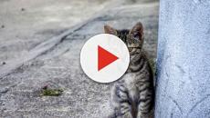 Cuando un gato mira fijamente puede ser porque quiere mostrar su afecto