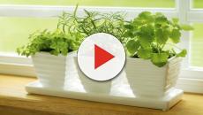 Tener plantas en tu casa puede mejor el ambiente