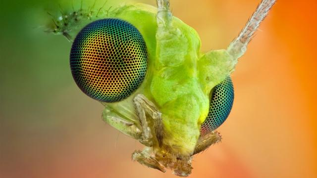 Cada vez más insectos procedentes del este: qué hacer en caso de pinchazo