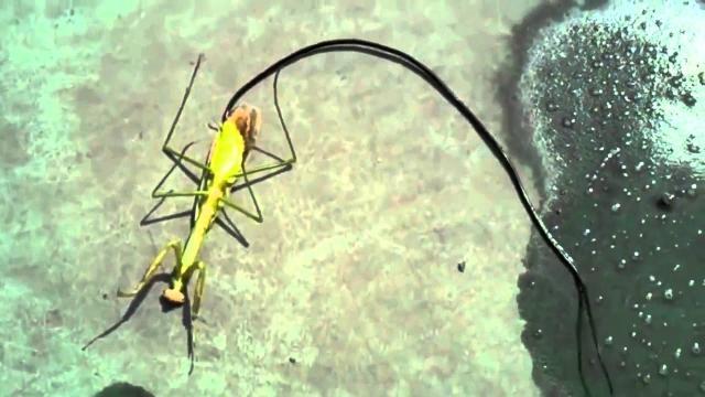 Insectos alienígenas de Oriente, en riesgo de padecer alergias: cómo defendernos