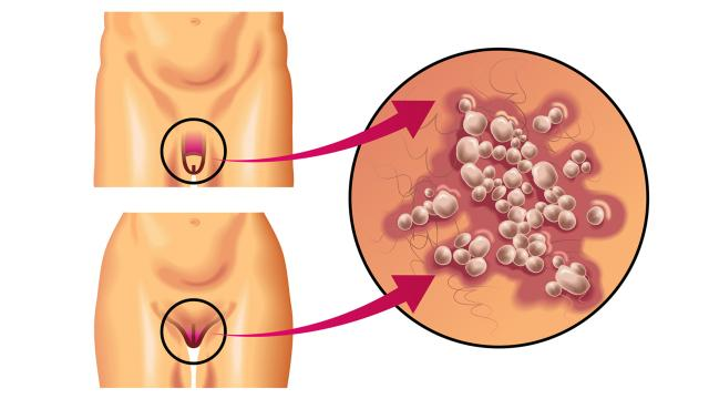 El órgano genital masculino se extendería: aquí está la nueva investigación