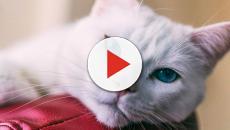 Curiosidades: el carácter de tu gato depende de su color
