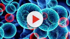 Esclerosis múltiple: nueva experimentación con células madre neurales al inicio