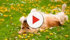 Cuidados para tu mascota en primavera