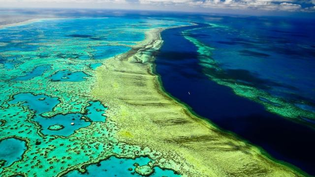 La Gran Barrera de Coral está amenazada por el calentamiento global