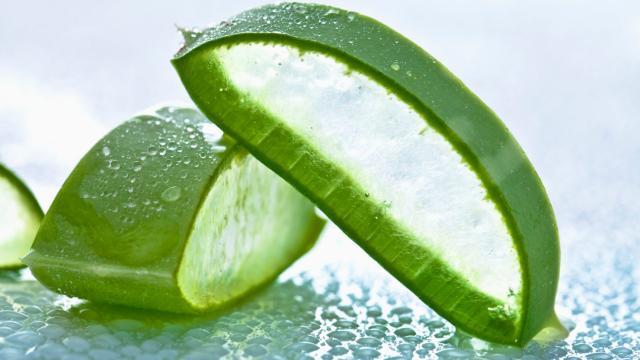 Aloe Vera, una planta de milenios con muchos efectos beneficiosos
