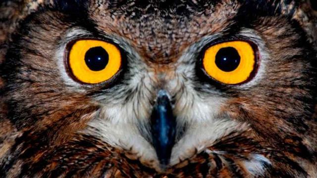 Curiosidades: cómo ven los animales