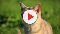 Giulianova: una nomade cucina i gatti del quartiere e li mangia