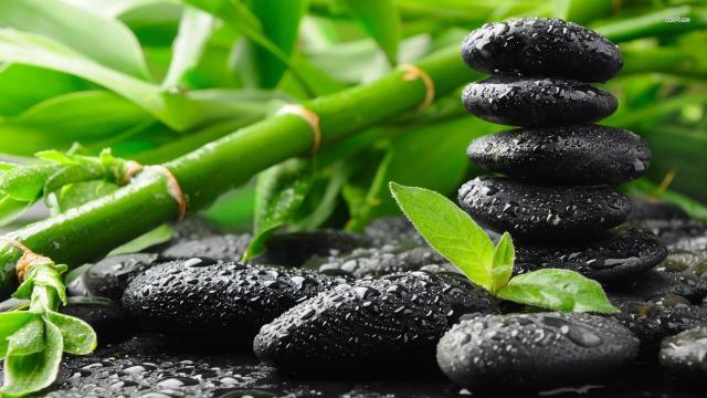 Zen: la forma solitaria de autoconocimiento