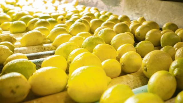 Limón, cítrico que es bueno para la piel, el cabello y los labios
