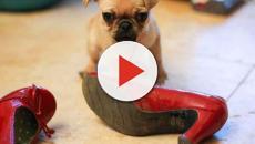 ¿Tu cachorro lo destroza todo?