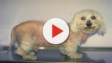 VÍDEO: El síndrome de Cushing en el perro!