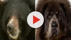 Cina: famiglia compra cucciolo di cane, ecco la scoperta choc