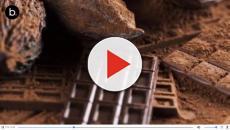 Grandes curiosidades del chocolate que seguramente no sabías