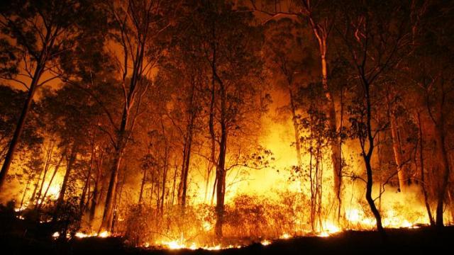 Los riesgos de los incendios forestales son altos nuevamente este año