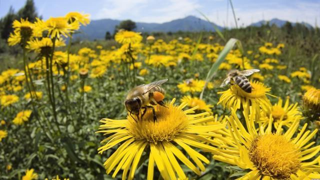 La ONU declara el primer día mundial de las abejas