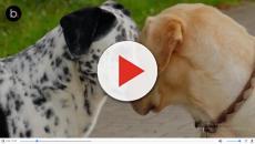 Científicos prueban el rejuvenecimiento genético en perros ¿Funcionará?