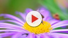 La giornata mondiale delle api