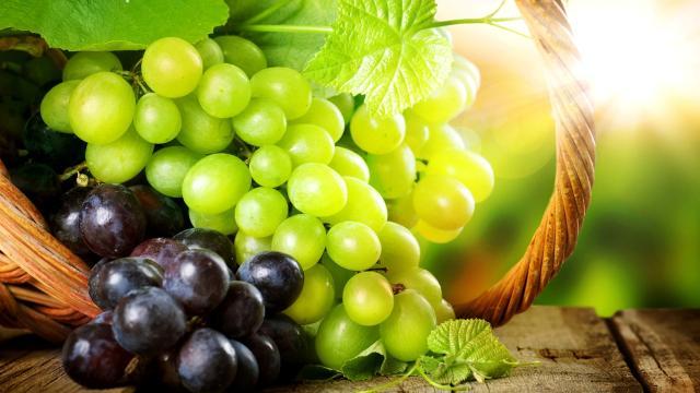 Contra el cáncer de colon, una proteína de uva