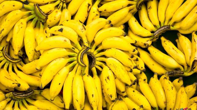 La enfermedad del banano, un hongo devastador
