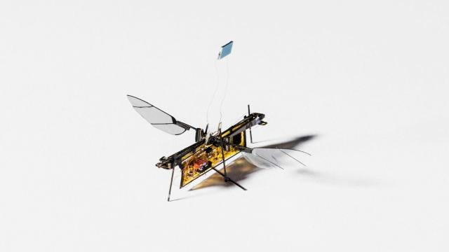 Droni insetto: Ecco come abbattere il problema della batteria