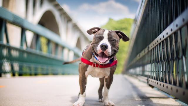 ¿Quieres vivir más? La ciencia responde: adopte un perro