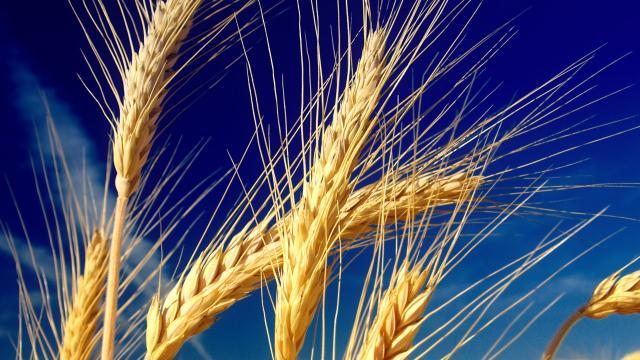 La etiqueta con el origen del trigo obligatorio en 6 meses