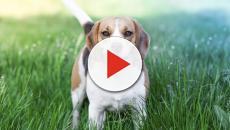 Algunas razas de perros que son difícil de enseñarles modales