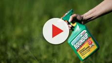 European Food Safety Authority (EFSA) has reviewed the safety of glyphosate
