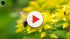 Elus et médias unis pour sauver les abeilles en Ardèche