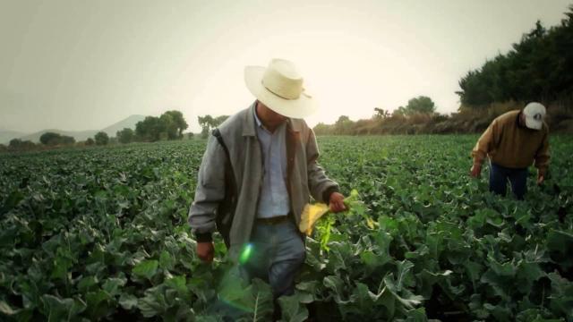 Nuevas tecnologías para la ayuda de el sector agropecuario