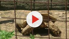 Animali in via d'estinzione su internet