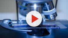 Nuovo test contro i tumori: ecco la microfotografia