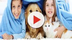 VIDEO: Beneficios de tener un amigo peludo en casa