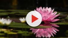 VIDEO: Cómo tener un jardín acuático en casa