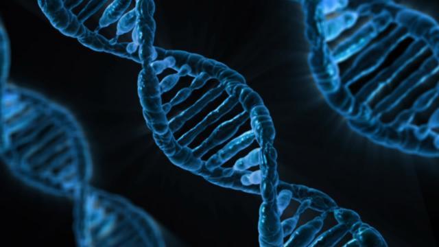 El cáncer de mama, la diabetes y la obesidad tendrían 38 genes en común